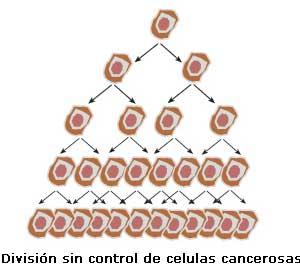 Como se produce el cáncer - División sin control de células cancerosas