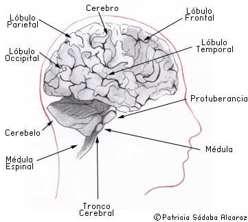 Qué Son Los Tumores Del Sistema Nervioso Central Asociación Española Contra El Cáncer
